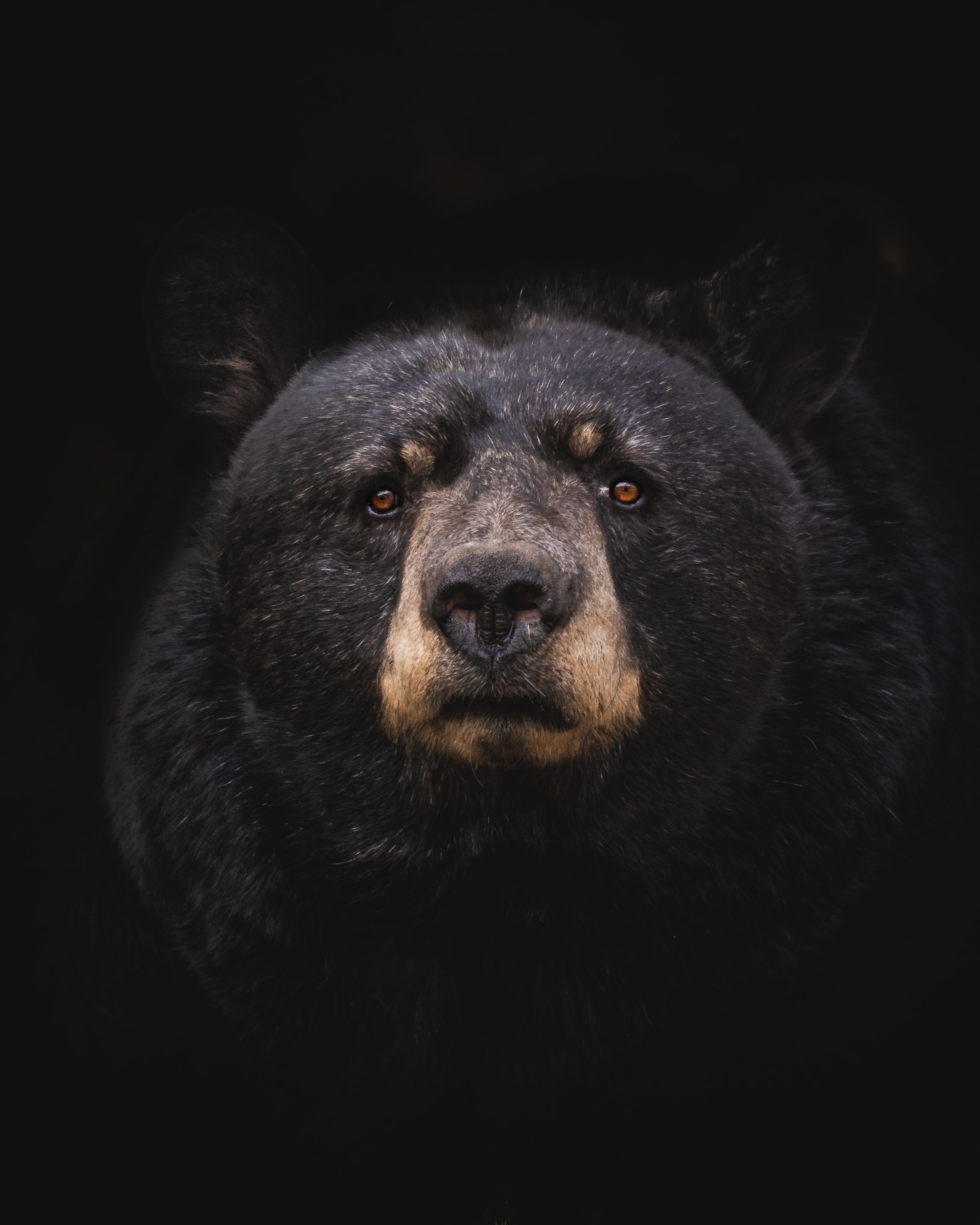 Bear Sighted in Ste. Genevieve