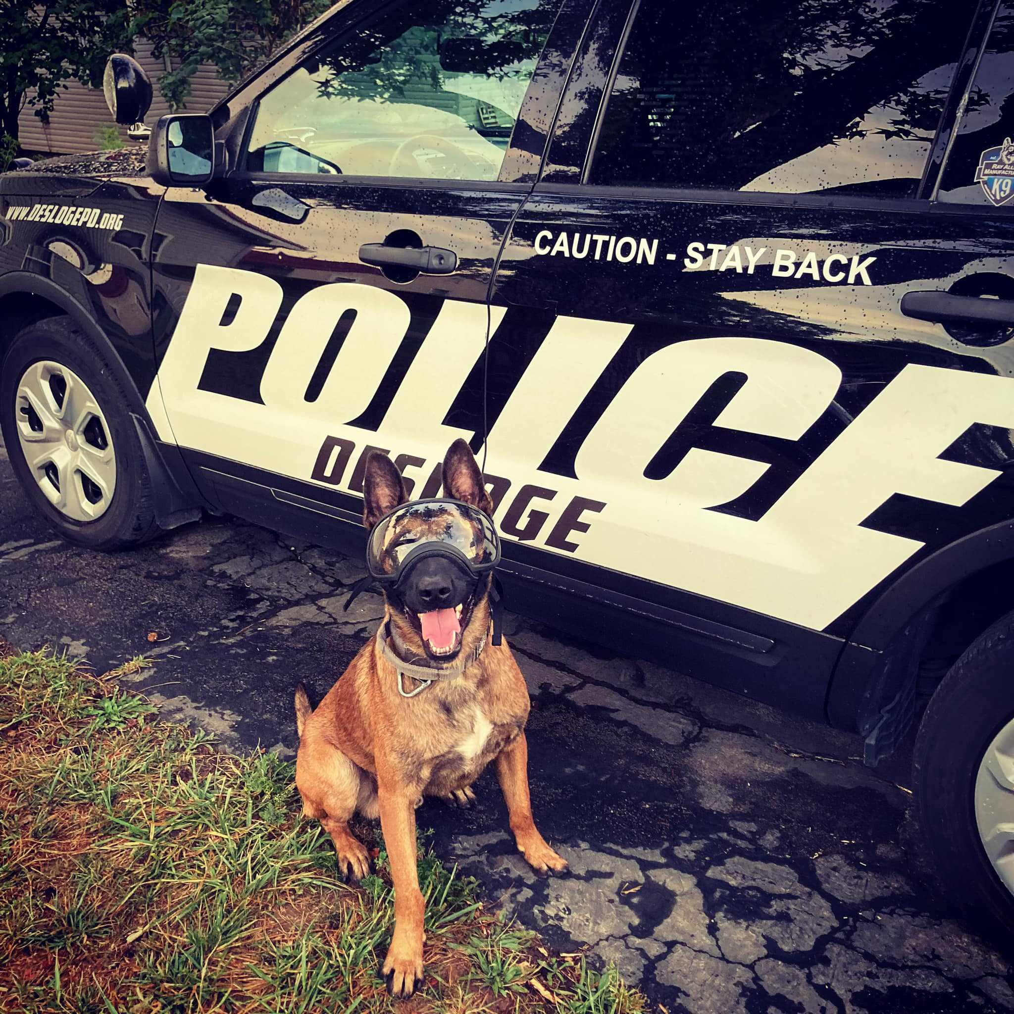 New K-9 Paying Off in Desloge