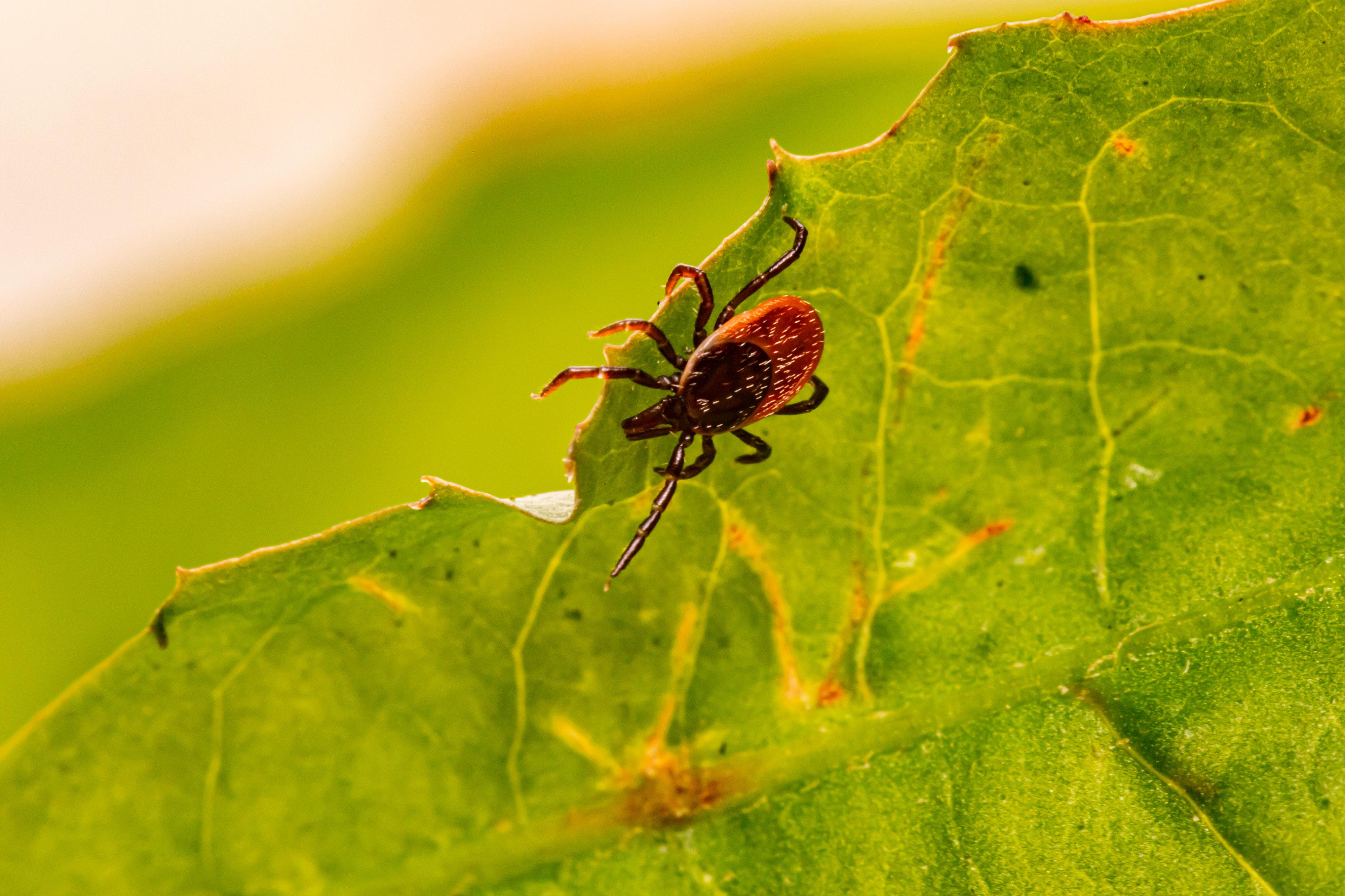 Avoiding Diseases Carried by Ticks